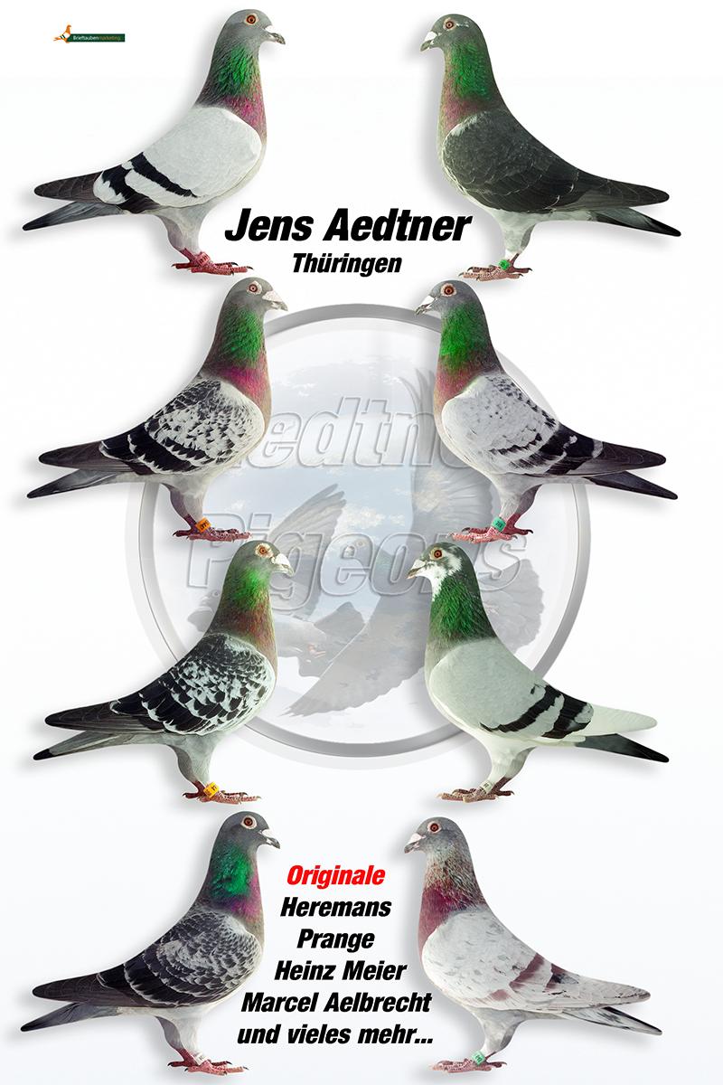 Aedtner-Pigions